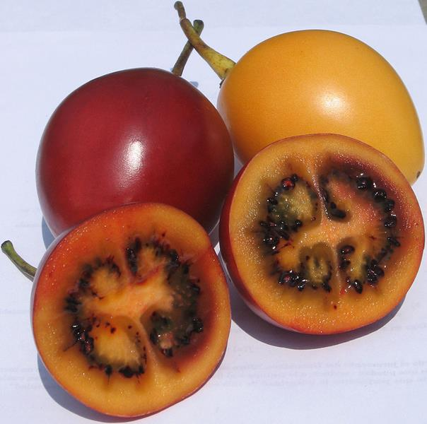 Tamarillo, red and yellow, exotic fruit